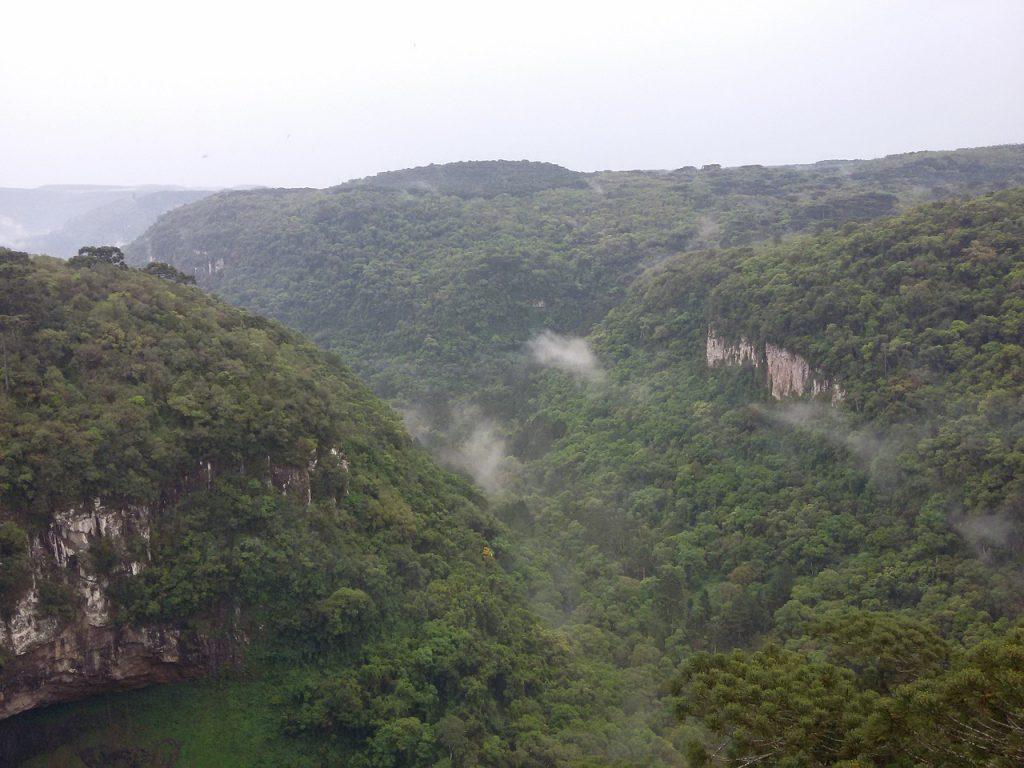 Forêt de Cannelle